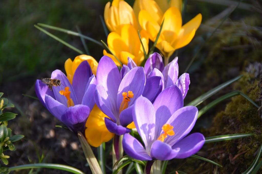 Der Frühling!